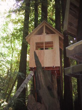 Treehouse Roof